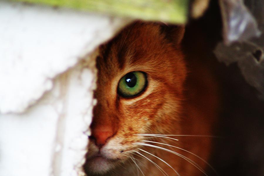 伊豆石廊崎の猫